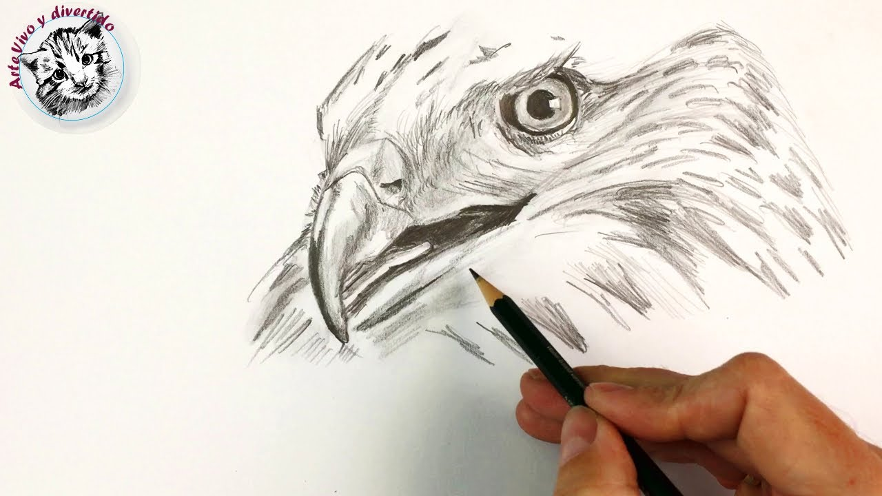 How To Draw A Hawk Step By Step With Pencil