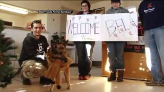 German Shepherd Who Was To Have Been Euthanized Per Owner's Will Gets New Leash On Life In Utah