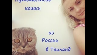 Как мы перевозили кошку из России в Таиланд.
