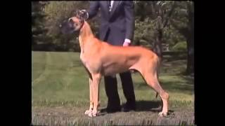 American Kennel Council Video On The Great Dane Part2