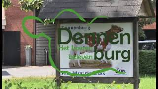 Dennenburg AVI PAL BREED