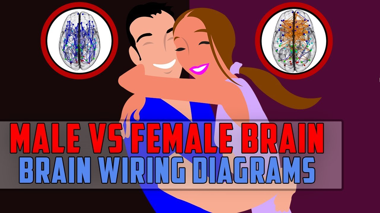 The difference between male brain and female brain : Brain Wiring ...