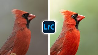 Simple and Effective LIGHTROOM Edits for Birds! screenshot 1