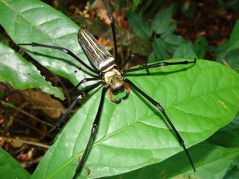 Giant Spider Web and Black Yellow Golden Web Spider ...