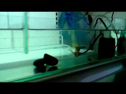 видео: Гидропоника на кухне!