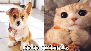 TikTok - Cute and Funny Baby Cat and dog Videos Compilation #21    koko animals