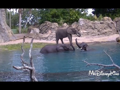 Insane Kilimanjaro Safari Ride With Jungle Cruise Moment!!!