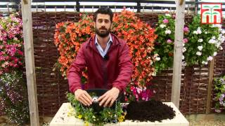 How To Plant An Easy Fill Hanging Basket For Winter - Thompson & Morgan