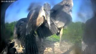 Heron Cam 2012 Highlights