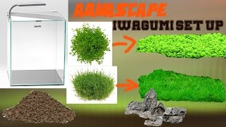 Iwagumi Aquascaping Set Up - Aquascape einrichten
