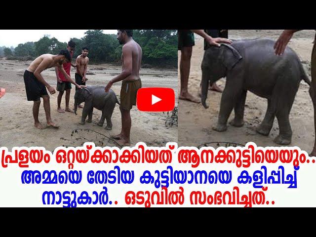 പുഴയിലൊഴുകി എത്തിയ ആനക്കുട്ടിയുടെ വീഡിയോ| നിലമ്പൂരില് നിന്നും| Baby Elephant in Nilambur