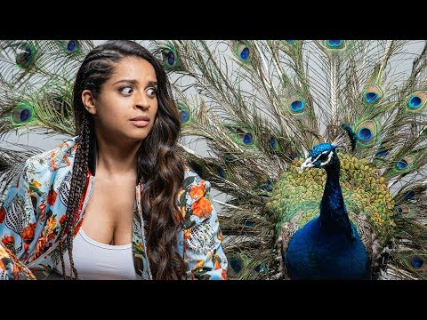 Shooting With A LIVE Peacock