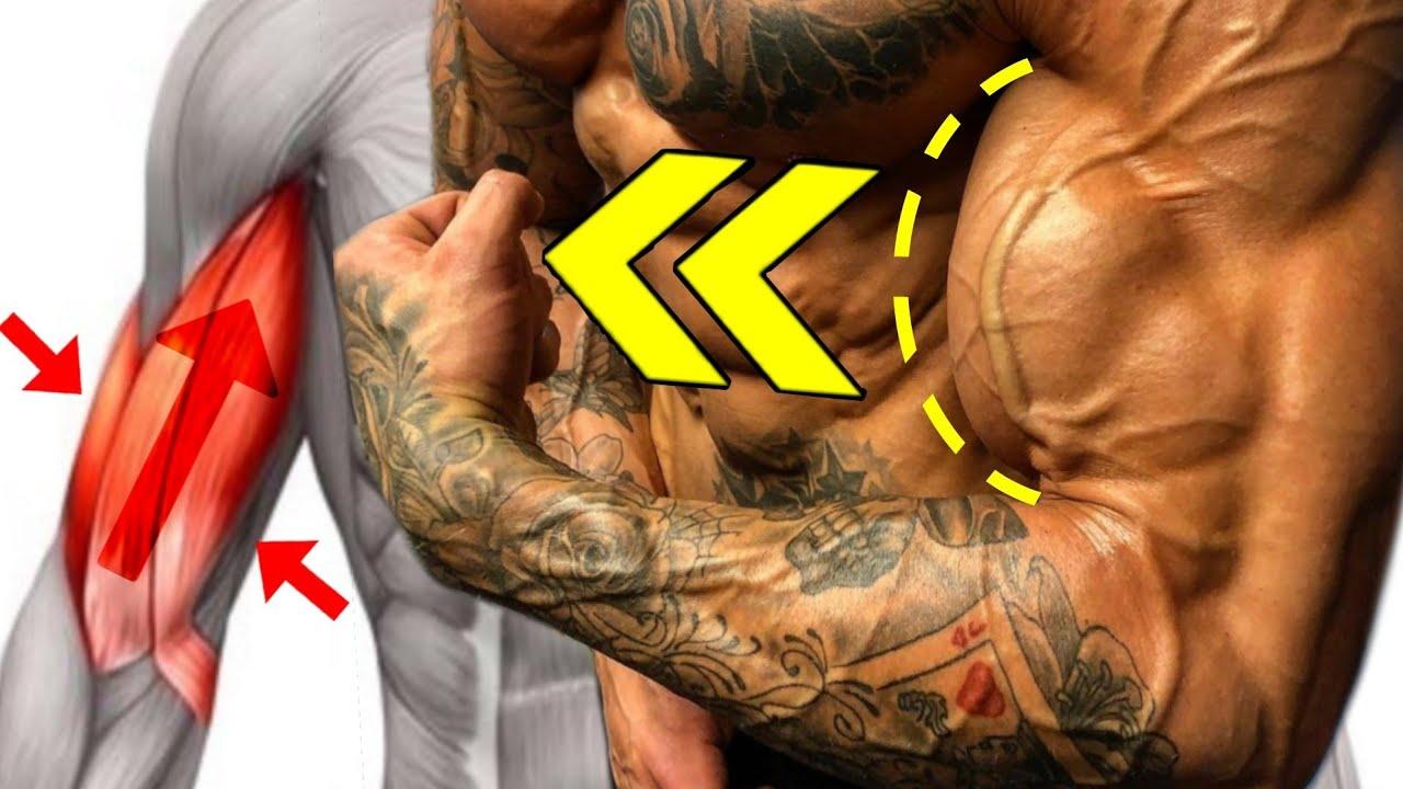 10 تمارين البايسبس يجب عليك القيام بها !! كمال الاجسام  - BICEPS  EXERCISES FOR BIGGER