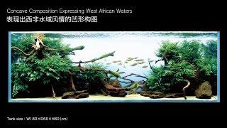 [adaview] 180cm Aquarium Layout: Concave Composition Expressing West African Waters(en/cn Subs)