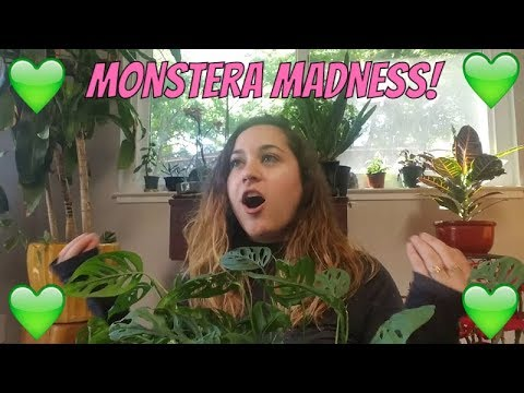 Mystery Monstera! + My Favorite Houseplant!