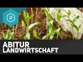 Landwirtschaft Zusammenfassung fürs Abitur - Landwirtschaft in Industrieländern 9