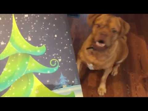 Does Your Dog Have Their Advent Calendar Yet?