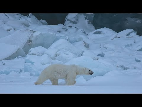 These Heartrending Images Of A Polar Bear Will Make You Question Where Humankind Is Heading
