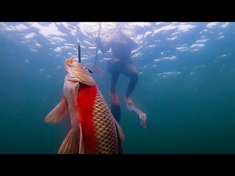 Spearfishing Lake Pleasant Arizona