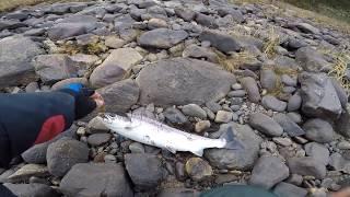 Кольский п-ов. Рыбалка на Кольском на  семгу и щуку. Река Варзуга.  (часть 2)