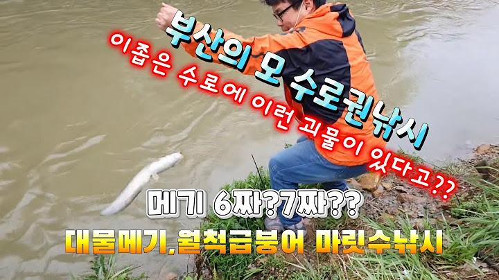 부산 수로권낚시 (대물메기,월척급붕어 마릿수낚시)