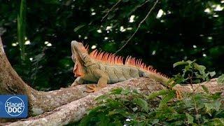 Inhabitants of the Amazon jungle (Tribes) - Part 1