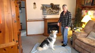 Dog Trained In Sign Language (march Video)