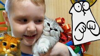 VLOG. Шотландский вислоухий котенок. Подарок Тимуру. Играем с котиком-)