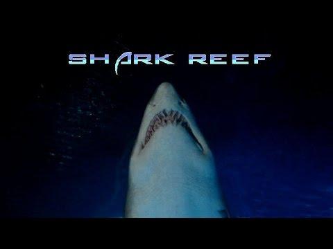 shark reef at mandalay bay las vegas aquarium youtube