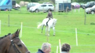 Jake: 1st working hunter Working hunter champion 2nd dressage 1st i...