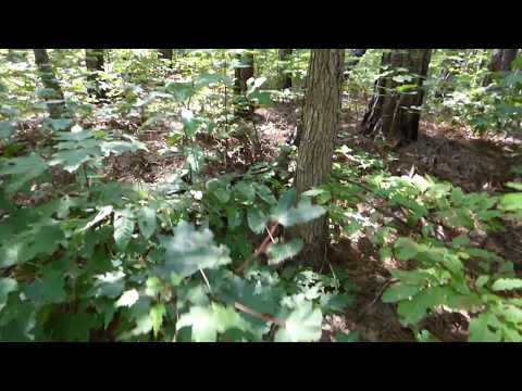 Alabama Bigfoot A Dogman or Young Bigfoot?