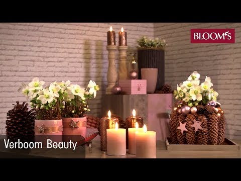 verboom beauty dekorative ideen mit christrosen youtube. Black Bedroom Furniture Sets. Home Design Ideas
