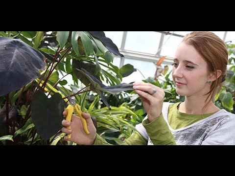 Gateway Technical College- Horticulture
