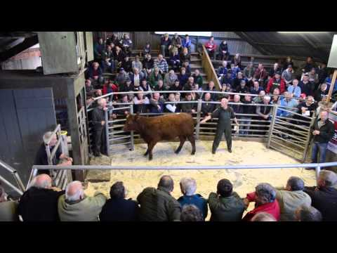 Mart's the heart: Annual NFU sale at Llanrwst