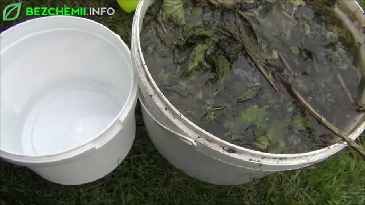 Jak pozbyć się mszyc za pomocą gnojówki z pokrzyw