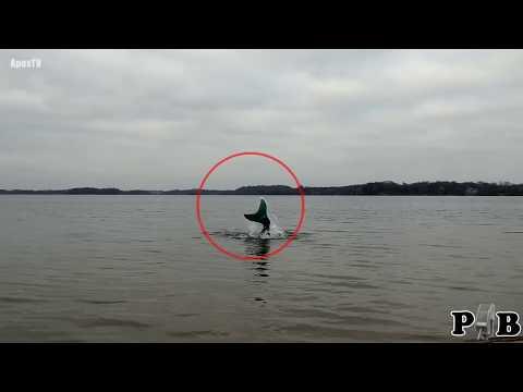 Real Mermaid Caught On Tape?