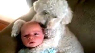 Собаки которые очень любят Детей! [NEW!]