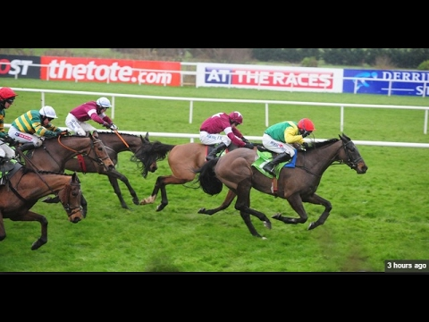 Sizing John - Leopardstown Irish Gold Cup (Build Up, Race & Reaction) [12/02/2017]