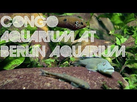 Congo Aquarium at Berlin Aquarium