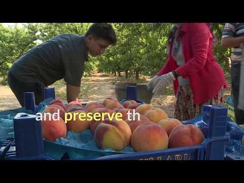 Sweet treats from Turkey: protecting Bursa's black figs and peaches