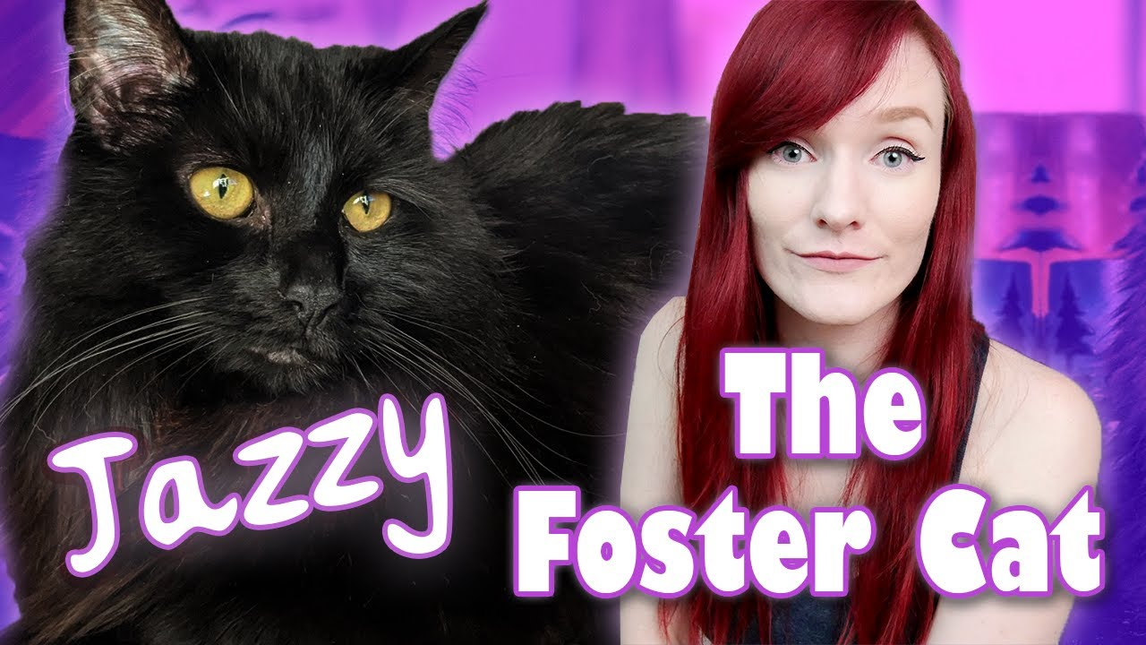 Fostering a Cat during the Pandemic | Jazzy's Rescue Story | Munchie's Place