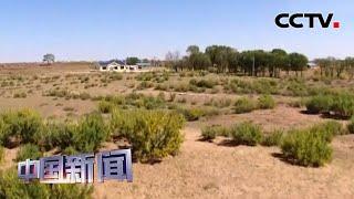 [中国新闻] 中国四大沙地实现生态整体改善 | CCTV中文国际