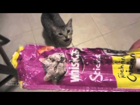 Funny Guilty Cats Compilation 2014