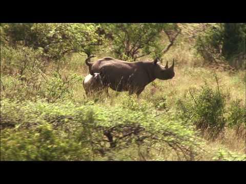 LEWA WILDLIFE CONSERVANCY  PART ONE