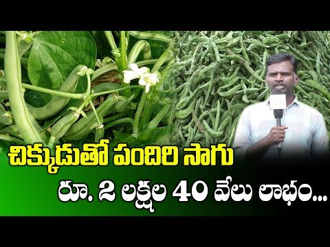 Farming Beans With Pendal System || Profits With Cultivating Beans || SumanTV Rythu