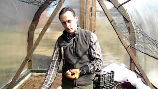 Как увеличить урожай картофеля делением клубня(Это видео о приемах, применяемых при посадке, увеличивающих урожай картофеля. Я советую при подготовке..., 2013-04-22T13:30:12.000Z)