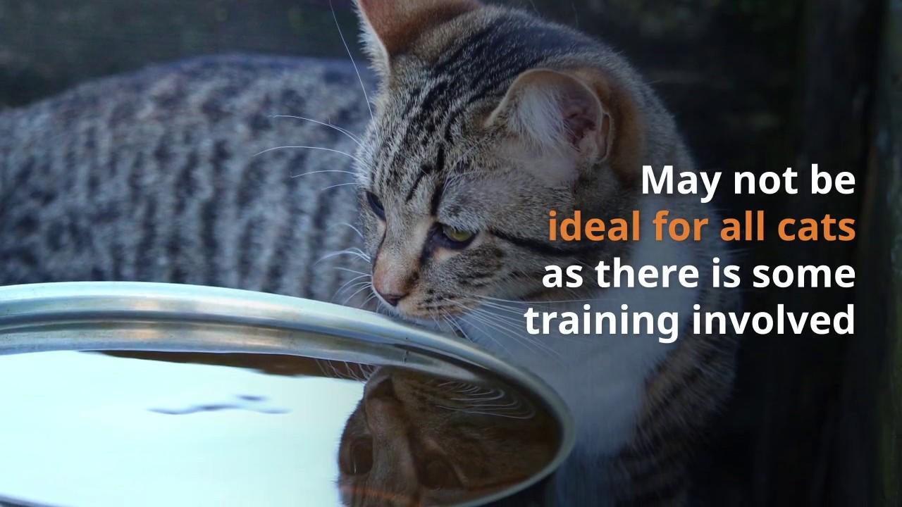 Aquapurr Cat Water Drinking Fountain Water Dispenser Review - YouTube