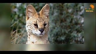 Wild Fauna / Хищник Африки / 3 часть
