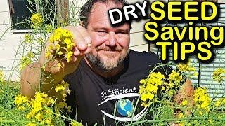 Seed Saving Tips Ep 1 - Dry Seeds | Organic Gardening