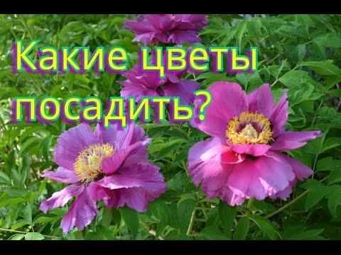 Цветы для сада!  Неприхотливы, но весьма красивы!